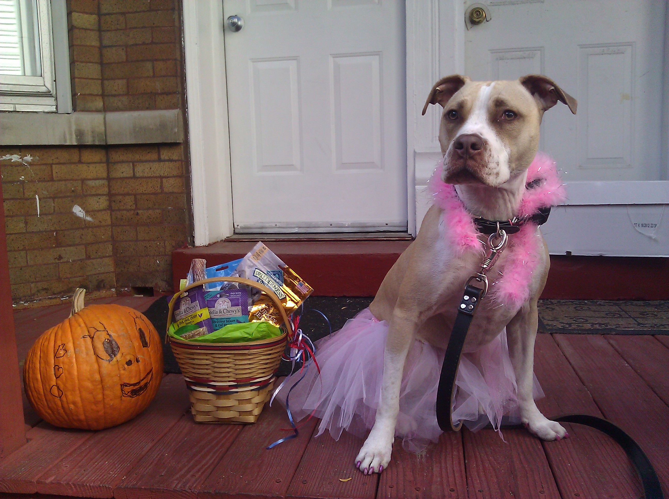 pitbull, chicago, halloween, wicker park, boo-palooza